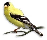 Canarybeach
