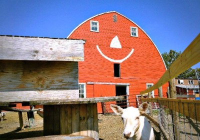 Erikson Farm smile