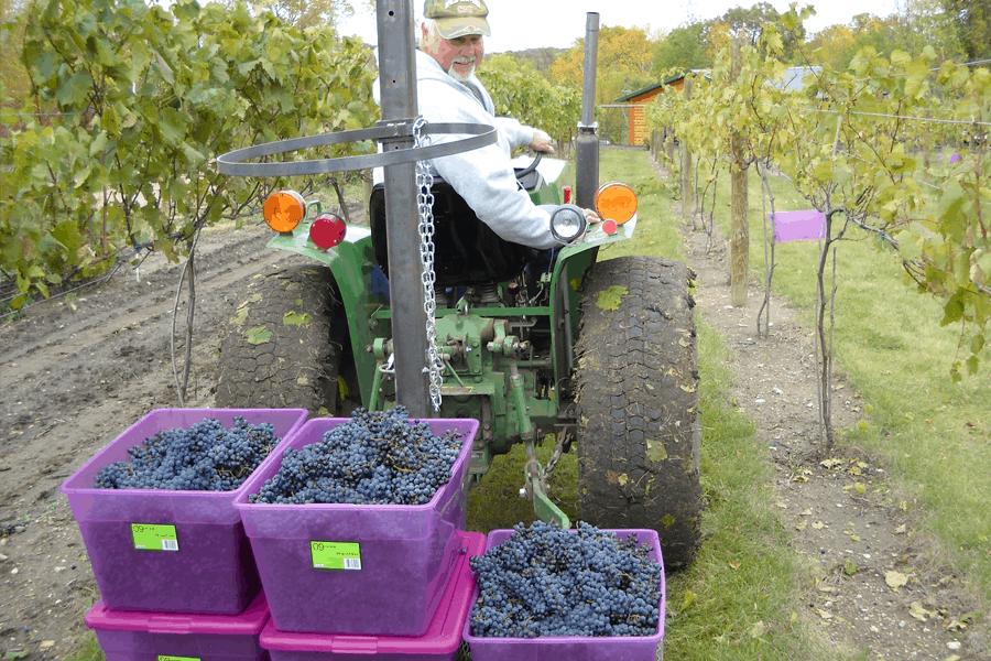 burr-vineyards-tractor