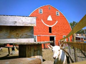 Erickson Farm smile