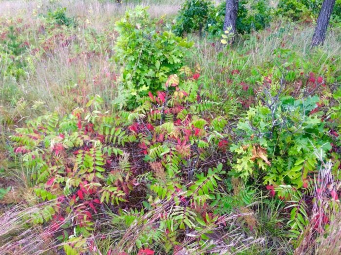 Explore Alex James Feist sumac cluster sept 2016