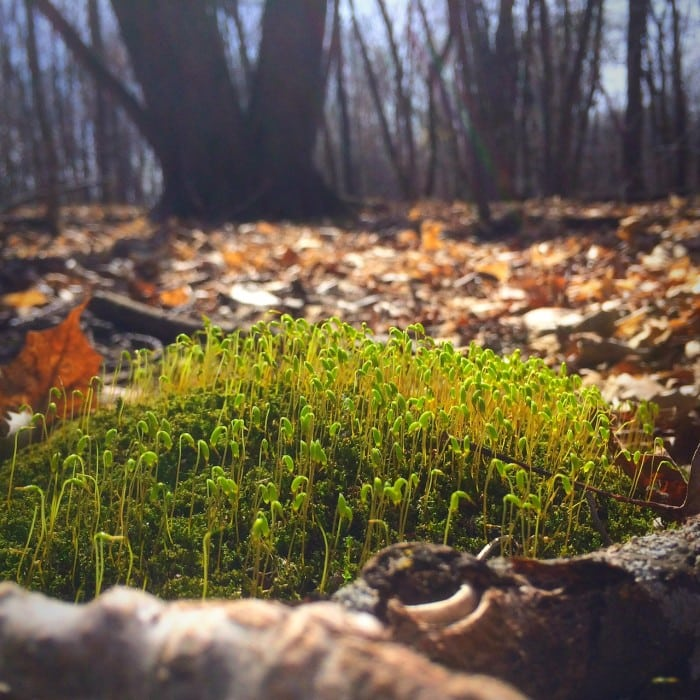 Lake carlos sprouts