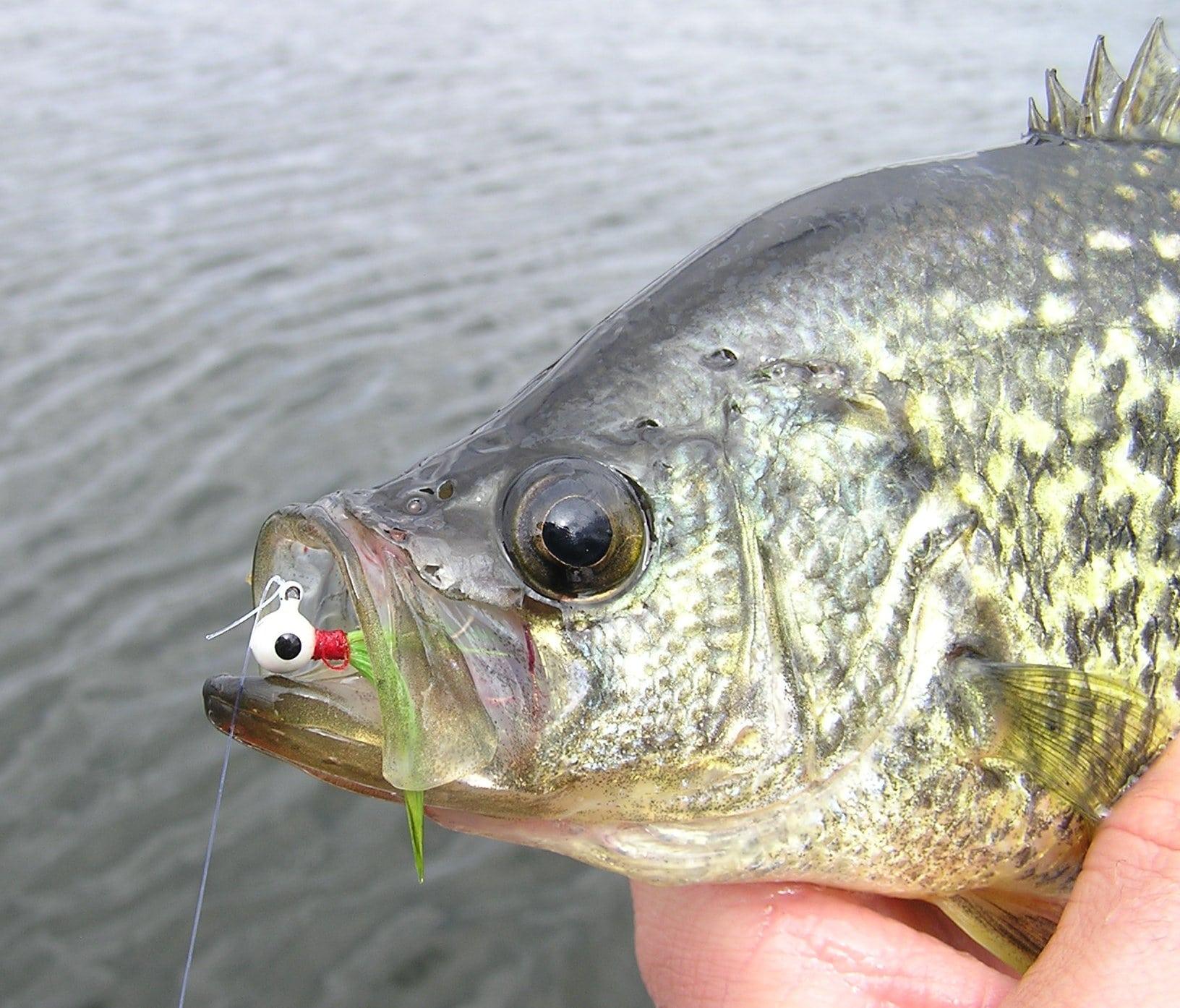 Nice-Average-Fish