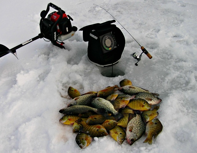 Nice catch of fish on the ice