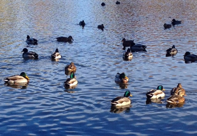 Quack quack! Welcome back!