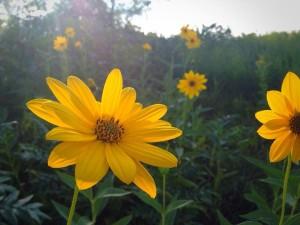 trailflowers2