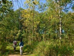 Lake Carlos early fall trail - Photo by James Feist