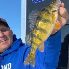 perch ice fishing pic